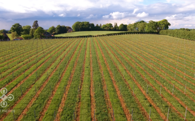 best-drone-uk-sussex-vineyard