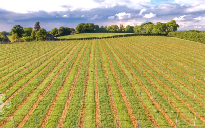 drone-agriculture-sussex-albourne-uk